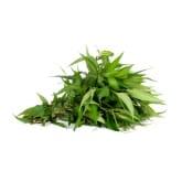 Laksa Leaves +/-50g