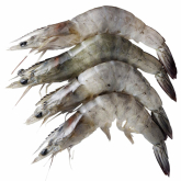 Frozen Thawed Grey Prawns